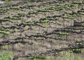 Este sistema, propio del Valle de La Orotava, es único en el mundo